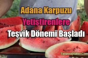 Adana karpuzunu ekenlere teşvik dönemi başladı