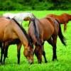 At Hastalıkları