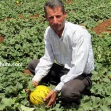 kavun tohumu nasıl ekilir