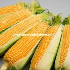 tatlı mısır dekara kaç kg ekilir