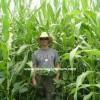 slajlık mısır ve slajlık soya fasulyesi karışımı