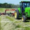 Rooiberg tarımı