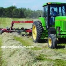 Ot Tipi Teff Grass tarımı