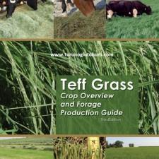 Ot Tipi Teff Grass ziraatı