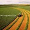 yonca tohumu nasıl ekilir