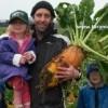 satılık hayvan pancarı tohumu