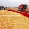 danelik mısır tohumu çeşitleri