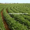 soya tohumu fiyatları