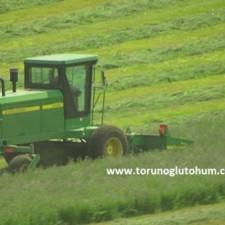 yonca tohumu fiyatları 2017