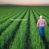 banko soğan tohumu fiyatları