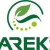Tareks Slajlık ve Danelik Mısır Tohumu Çeşitleri