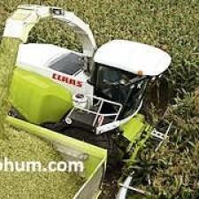 en verimli slajlık mısır tohumu çeşitleri