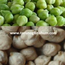 sertifikalı nohut tohumu fiyatları