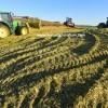 satılık slajlık mısır tohumları