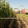 saljlık mısır tohumu fiyatları 2017