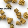 beta pancar tohumu çeşitleri