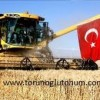 Buğday Tohumları