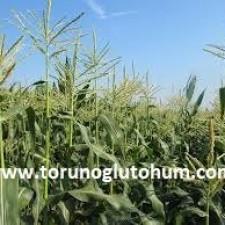 mısır ekim zamanı