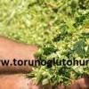 danelik mısır tohumu fiyatları 2017