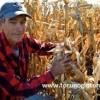 mısır yetiştiriciliği gübreleme