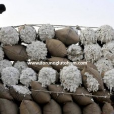 progen pamuk tohumu çeşitleri