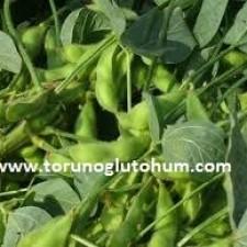 satılık soya fasulyesi tohumu