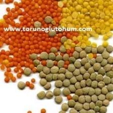 mercimek tohumu fiyatları