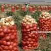 soğan ihracatı