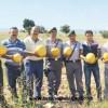 hibrit kabak çekirdeği tohumu