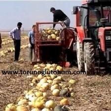 kabak çekirdeği hasat makinası