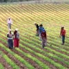 Tarımdan, Mart'ta 5 milyonluk istihdam