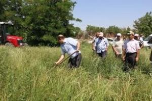 Erzincan'da İlk Kez Ryegrass (İtalyan çimi) Alternatif Yem Bitkisi Tarla Günü Düzenlendi.