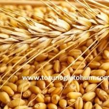 buğday tohumu isimleri