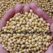 slajlık soya fasulyesi tohumu fiyatları