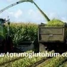 sertifikalı slajlık mısır tohumu