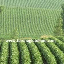 sertifikalı soya tohumu çeşitleri