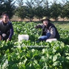 hayvan pancarı tohumu satışı