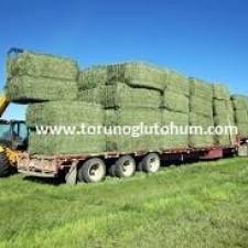 prosementi yonca tohumu fiyatları