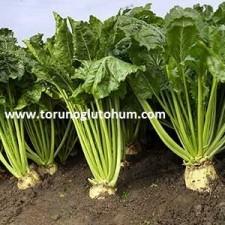 sertifikalı pancar tohumları