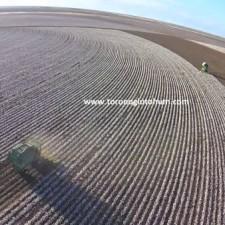 set tohumculuk pamuk tohumu çeşitleri