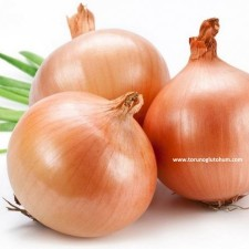 arpacık soğan tohumu fiyatları