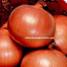 kırmızı soğan tohum fiyatları