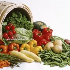 sebze tohumu firmaları