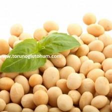 soya tohumu çeşitleri