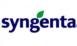 Syngenta Ayçiçeği Tohumu Çeşitleri