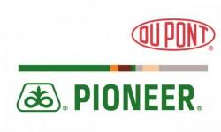 Pioneer Ayçiçeği Tohumu Çeşitleri