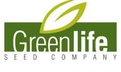 Greenlife Slajlık Msır Tohumu Çeşitleri