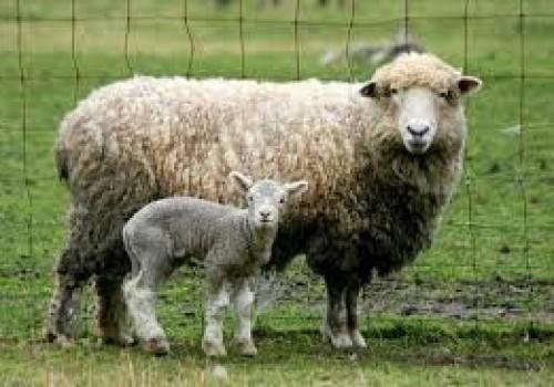 Romrey Koyun Irkı