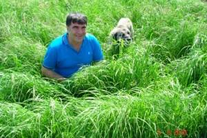 Teff Grass Tohum Fiyatı
