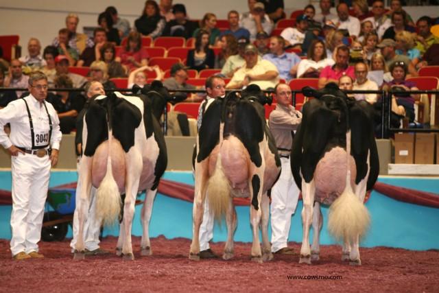 damızlık sığır yetiştiriçileri birliği